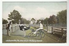 [53836] OLD POSTCARD OLIVER W. Jr. THE RACING OSTRICH IN JACKSONVILLE, FLORIDA