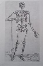 Vesalius DIE 1. FIGUR DER BEINE Nachdruck Kupfertafel Medizin Anatomie print