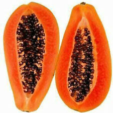 Home 8Pcs Garden Maradol Papaya Seeds Vegetable Fruit Tree Plants Seeds Outdoor