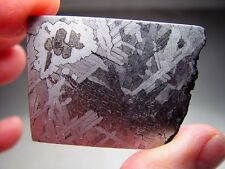 LOW PRICE! EXQUISITE ETCH! TERRIFIC TOLUCA IRON METEORITE FROM MEXICO! 29.5 GMS