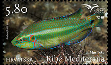 Fish of the Mediterranean mnh stamp 2016 Croatia Ocellated Wrasse
