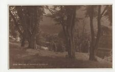 Beeches at Dunkeld, Judges Postcard, A942