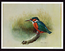Vintage Kingfisher Reeds Basil Ede Art Printed in England Very Good Condition