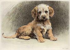 DANDIE DINMONT TERRIER DDT DOG FINE ART PRINT ENGRAVING - by Herbert Dicksee