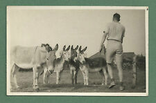 LOVELY C1950'S B/W PHOTO OF MAN WITH FOUR DONKEYS