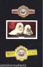 MALTESE TERRIER DOG -GALLAGHER CIGARETTE CARD + TWO CIGAR LABELS - A