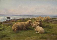 Sheep by the Sea Rosa Bonheur Schafe Küste Tiere Lamm Wiese Meer B A3 03192