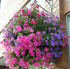 BALCONY FLOWER MIX seeds - Lobelia Petunia Marigold Busy Lizzie Snapdragon