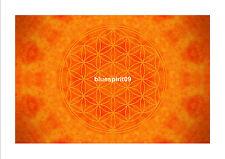 Energie Bild - Die Blume des Lebens - Erdung - Meditationsbild