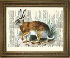 "ANTIQUE DICTIONARY BOOK PAGE ART: Wild Brown Hare / Rabbit Vintage Print (8x10"")"
