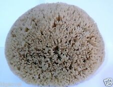 TERAA !!! Honeycomb Sea Sponge 10''= 25.4cm Greek LUXURIOUS- SPECIAL - ONLY ONE