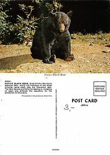 USA Tennessee - Native Black Bear on the Great Smoky Mountain (A-L 429)