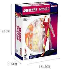 4D Vision Human Anatomy Series Body muscle Science Model Educational Puzzle New