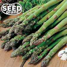 Mary Washington Asparagus Seeds -25 SEEDS NON-GMO