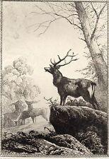 EAU FORTE / Fables de la Fontaine 1883 / LE CERF MALADE