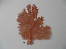 "NATURAL RED SEA FAN 11-1/2"" CORAL REEF, SEA SHELL BEACH DECOR  CRAFT  #38B"