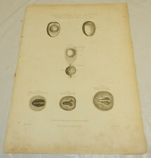 """1808 Antique Botanical Print/PROGRESS OF AN EGG, BY INCUBATION/13x19"""""""