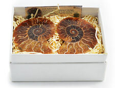 Boxed Cut and Polished Ammonite Pair with Display Stands and Information Card