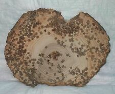 PETRIFIED WOOD ROUND END CUT HALITE CRYSTALS SWEET HOME OR VERY RARE WOOD GRAIN