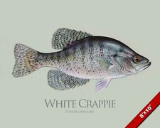 WHITE CRAPPIE SUNFISH FISH PAINTING FRESHWATER FISHING ART REAL CANVAS PRINT