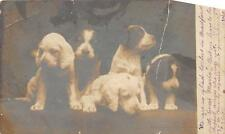 RPPC DOGS ROTOGRAPH REAL PHOTO POSTCARD 1905