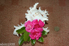 Large Murex seashell for flower arranging (medium size)