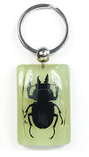 Glow In The Dark Lucite Charm Keychain w/ GENUINE Blackish Stag Beetle YK5942