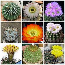 20 semi in miscuglio di Acanthocalycium mix , piante grasse,seed cactus mix