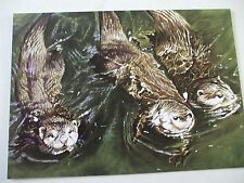 3 otter cards with water scene envelopes from tree free greetings