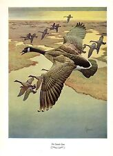 """1957 Vintage FRANCIS LEE JAQUES """"CANADA GOOSE"""" LOVELY Color HUNTING Lithograph"""