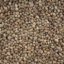 Bulk Buy Sack of Hemp Seed 15 Kg For Wild Bird Feed & Fishing Bait