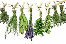 Wicca 40 Love and Lust Herb Lot:Witch,Spells,Pagan
