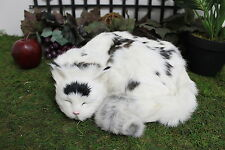 Black & White Sleeping Cat Adorable Furry Animal Taxidermy Figurine Decor Kitty
