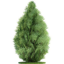 50PCS Small Green Arborvitae Cypress Sempervirens Pine Tree Seeds Garden Decor