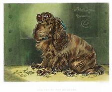 "Lanseer's ""THE PET OF THE DUCHESS"" - Dog - Hand-Colored Steel Engraving - 1875"