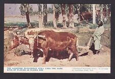 Life in India 1920-30s Vintage Real Scence Postcard - Kashmiri Ploughman