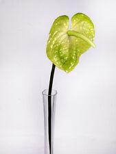 Artificial Anthurium Stem Line Length 76cm - Tailflower  -  Flamingo Flower