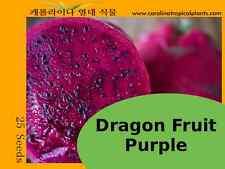 Purple Dragon Fruit (Hylocereus polyrhizus) seeds - 25 Seeds