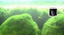 Wassergras Unterwasserpflanzen Filter für den Gartenteich Biofilter gegen Algen
