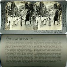 Keystone Stereoview of NATIVES & ELEPHANT on Road, INDIA From 600/1200 Card Set