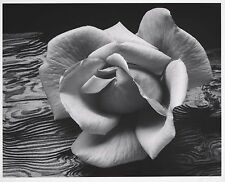 "Rose and Driftwood photo by Ansel Adams, 13""x16"", Giclee Canvas Print"