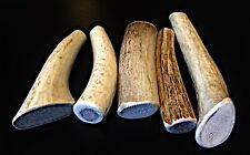 Small Elk/Deer Whole Antler Dog Chew..Free Shipping...100% Natural And Healthy