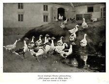 """Franz Gräßel Gänse"""" Früh morgens, wenn die Hähne krähn-"""" Histor. Kunstdruck 1912"""