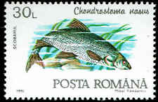 Scott # 3732 - 1992 - ' Fish, Chondrostoma Nasus '