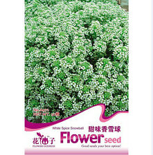 FD1234 White Spice Snowball Seed Lobularia Maritima ~1 Pack 60 Seeds~ Free Ship