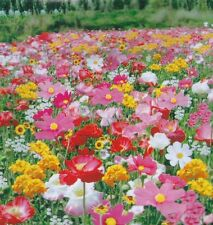 wildflowers mix Seed 200 seeds perennial Flower Garden yard Patio Plants