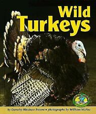 Wild Turkeys (Early Bird Nature)