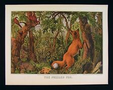 Currier and Ives Print - The Puzzled Fox - Birds Forest Tree Faces Puzzle Scene