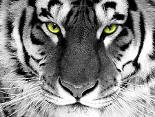 WhiteTiger Head Yellow Eye Diamond Mosaic painting Kit 30x40cm like cross stitch