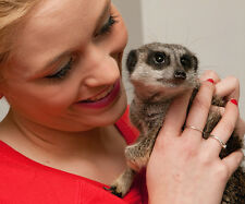 Meet the Meerkats for Two People - Greet & Feed the Meerkats - SAVE £20